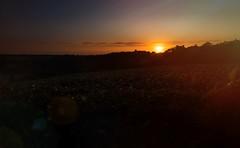 sun set sud ouest (ju.labs) Tags: canon 2470f4 landscape paysage france couleurs soleil sunset sun sunrise champs nature finegold nofiter