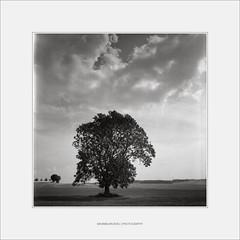 Landscape w/Ilford FP4 (II) (Maximilian Busl) Tags: sky blackandwhite tree film clouds zeiss landscape bayern deutschland scan hasselblad ilford 500cm ilfordfp4 töpen 40distagon