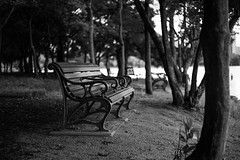 Bench (sou.0103.touch5) Tags: monochrome summicron 50mm summicron50mm leica m10 leicam10