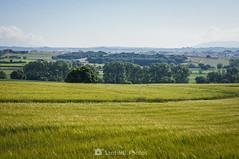 Paisaje mixto (SantiMB.Photos) Tags: 2blog 2tumblr 2ig gallecs mollet vallèsoriental vallès primavera spring campos fields paisaje landscape geo:lat=4155045718 geo:lon=219378912 geotagged molletdelvalles cataluna españa