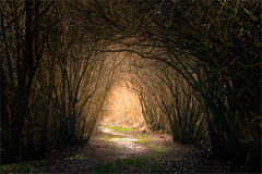 Light at the End of the Tunnel (Graeme O'Rourke) Tags: lrd5d1000157v2 abstract tunnel nature bushes mysterical landscape national trees light yellow black brown green path leaves roots