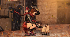 Let me care about you (meriluu17) Tags: rain autumn fall rainy day cat animal kitt kitty care help drops drop wind windy una lepoppycock leaves falling