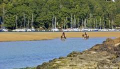 ' La Laïta '  Guidel  - Bretagne / Morbihan (jean-paul Falempin) Tags: chevaux voiliers bateaux bretagne brittany morbihan coursdeau rusruisseaurivière ria paysage forêt nikonpassion