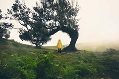 ... (Benny / 2B-OptiK) Tags: madeira portugal fog forest fanal mood moody foggy raincoat yellow landscape nature travel landschaften landscapes beauty people girl sigma green art outside