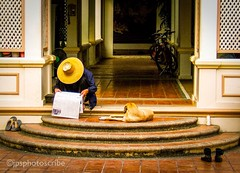 The morning papers (stewardsonjp1) Tags: relax rest streetscene streetphotography hat morning newspaper read dog man thailand bangkok
