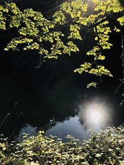 A New Day (skipmoore) Tags: ashland pond reflection leaves sunlight
