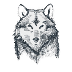 Wolf head grunge hand drawn sketch vector illustration (M. Masserann) Tags: wolf dog vector wild print beast line fur head drawing black hunter attack artwork realistic face design sketch engraving art artistic zoo nature scary animal husky wildlife siberian eyes pen ink werewolf fierce grey wolfhead graphic savage retro predator handdrawn vintage grunge