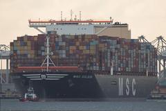 MSC Gülsün  Container Ship - Maasvlakte - Rotterdam (Jan de Neijs Photography) Tags: ship containerschip containership containerreus vessel megaschip zuidholland holland nederland thenetherlands dieniederlande southholland tamron150600g2 tamron tamron150600 150600 g2 cargo schiff containerschiff maasvlakte rotterdam hvh msc nl hoekvanholland containers nieuwewaterweg mscgülsün gülsün imo9839430 9839430 gulsun vrachtschip containergigant panama zeecontainers containeroverslag 23756teu beerkanaal yangtzekanaal 400meter containervessel megacarrier containertransport