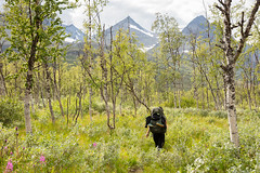 Sarek VII (Gustaf_E) Tags: berg birch björk fjäll forest johannaeriksson jokkmokk kvinna2530år landscape landskap lappland mountain nationalpark norrland rapaselet sarek skog sommar sverige sweden urskog woods