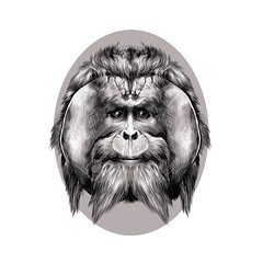 orangutan (M. Masserann) Tags: orangutan vector sketch illustration drawing orang animal wild ape wildlife malaysia jungle mammal zoo primate indonesia nature asia background white hair hairy isolated art graphic forest macaque chimp funny face portrait symmetry fullface bigfoot growthsontheface blackandwhite monochrome round oval brown grey beige