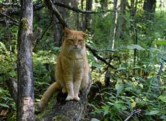 Forest Feline (jmunt) Tags: stewartjcat cat