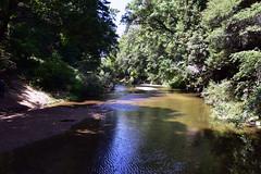 San Lorenzo River (Ian E. Abbott) Tags: sanlorenzoriver henrycowellredwoodsstatepark cowellredwoods california felton stateparks redwoodtrees redwoods forest
