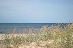 IMG_6548 (kamilaandree) Tags: riga latvia forest nature north balticsea beach sand
