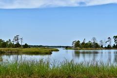 Windmill Point (donnacurrall) Tags: marsh greatblueheron cove windmillpoint northernneck virginia