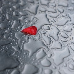 Wondering.... (No Great Hurry) Tags: thenakedabstract leaf heart love red splash raindrops wet nogreathurry wondering tabletop dof depthoffield x100f robinmauricebarr water minimal abstract dreamy dreamlike twocolours twocolors minimum light focus cmwdred bsquarecompetition onthetable
