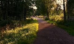 Another Day's Ending (halleluja2014) Tags: road shadow summer sunshine evening stig falun väg cykelväg herrhagen kvällsol slätta august