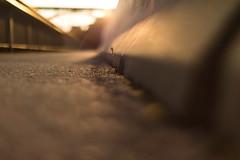 contra (nicolasheinzelmann) Tags: abend gegenlicht goldenestunde goldenhour pflanze beton trottoir kirchenfeldbrücke herbst licht stadt schweiz bern color colour farbe farbig canoneos5dmarkiv 5dmkiv 5dmiv canonef50mmf12lusm day dslr switzerland lights light urban 5september2019 september nicolasheinzelmann fall autumn