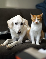 Everest and Evie (Clever Poet) Tags: everest eveline evie dog cat 11monthold puppy serious kidney disease died last night very sad beautiful love affair between canine feline