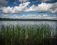 Lake Kabetogama (nebulous 1) Tags: lakekabetogama voyageursnp voyageursnationalpark nationalpark nationalparks water cattails clouds lake nikon nebulous1 glene mn minnesota