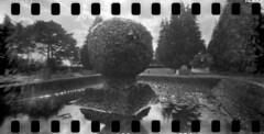2418 Bird Bath. (Monobod 1) Tags: ondu 135 panoramic expired ilford hp5 rodinal pinhole lensless epsonv800