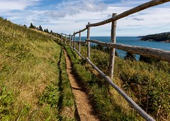 Father Troy Trail (Karen_Chappell) Tags: torbay newfoundland nfld canada eastcoast eastcoasttrail atlanticcanada avalonpeninsula fence trail path green field nature outdoors blue sky clouds ocean harbour bay atlantic shadow wood wooden railing grass landscape scenery scenic