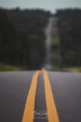 Dean Road (Brad Lackey) Tags: road hills yellowlines long vanish vanishing vanishingpoint low sunset trees forest shallowdof bokeh nikon70200mmf28 d7200