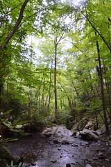 Smoky Mountains NP | 2019.09.01 | DSC_0772 (Kaemattson) Tags: greatsmokymountainsnationalpark greatsmokymountains smokymountains blueridgemountains mountains appalachianmountains appalachiantrail tremontinstitute cadescove
