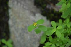 Smoky Mountains NP | 2019.09.01 | DSC_0674 (Kaemattson) Tags: greatsmokymountainsnationalpark greatsmokymountains smokymountains blueridgemountains mountains appalachianmountains appalachiantrail tremontinstitute cadescove