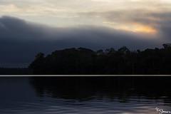 Sandoval lake (Kusi Seminario) Tags: tambopata sandoval sandovallake lagosandoval water agua madrededios peru southamerica sudamerica lake lago nature outdoors sunset atardecer puesta de sol puestadesol clouds nubes sky cielo reflections reflejos reflection