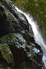 Smoky Mountains NP | 2019.09.01 | DSC_0739 (Kaemattson) Tags: greatsmokymountainsnationalpark greatsmokymountains smokymountains blueridgemountains mountains appalachianmountains appalachiantrail tremontinstitute cadescove