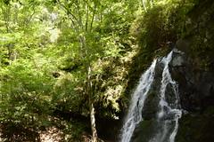 Smoky Mountains NP | 2019.09.01 | DSC_0758 (Kaemattson) Tags: greatsmokymountainsnationalpark greatsmokymountains smokymountains blueridgemountains mountains appalachianmountains appalachiantrail tremontinstitute cadescove
