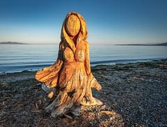 "Driftwood into art ...""Wave"" the Maiden of the Sea. (Picture-Perfect Pixels) Tags: cheknewsaugust222019 chainsawcarving beautifullighting beautiful artistic art procarverjimleithead dreamy scenic peaceful serene mystical britishcolumbia vancouverisland saanich islandviewbeachregionalpark beach driftwood driftwoodcarving lady ocean sunset water woman pacificocean soulful flickrexploreseptember62019"