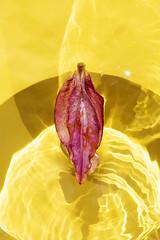 (daniel wdzięczkowski) Tags: wdzięczkowski reflection bydgoszcz unreal sun simple photography photo abstraction canon light color colors flowers yelow