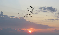 IMG_0029x (gzammarchi) Tags: italia paesaggio natura mare ravenna lidoadriano alba sole animale fenicottero volo stormo