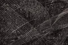 Tarred Willow (pni) Tags: blackswan art sculpture piece work tarredwillow detail jennitieaho multiexposure multipleexposure tripleexposure pni3xp tarvaspää gallenkallela museo museum espoo esbo finland suomi pekkanikrus skrubu pni monochrome