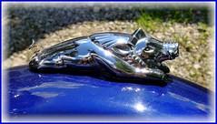Motorrad-Wildsau / Motorbike-wild boar (ursula.valtiner) Tags: motorrad motorbike wildschwein wildboar baumschlagerreith hinterstoder oberösterreich upperaustria austria autriche österreich