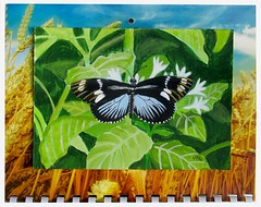 September 2019 (M.P.N.texan) Tags: art painting botanical butterfly heliconius insect handpainted original mpn calendar