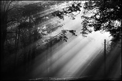 Misty morning at Seven Pines. Fourteen years ago. (Starej Grafik) Tags: mist misty fog dawn morning trees light sun autumn october czechrepublic backlight nikon nikond70 bw bwphotography