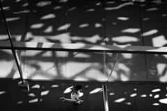MARSEILLE-MUCEM-7 (eljuz) Tags: marseille mucem architecture contraste france noiretblanc nb bw contrast lumière musée ombre leicaq leica