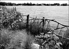 Happy Fence Friday... (angelakanner) Tags: canon70d tamron18400 bayardcuttingarboretum happyfencefriday blackwhite water wood plants