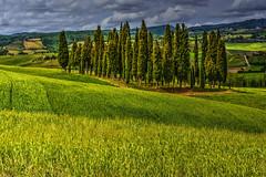 Cipressi (giannipiras555) Tags: toscana cipressi alberi verde valdorcia natura colori collina landscape paesaggio panorama nuvole cielo nikon