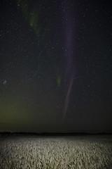 SeptSTEVE (DustinGinetz.Photography) Tags: strongthermalemissionvelocityenhancement steve aurora auroraborealis solar wind dark sky night starts light