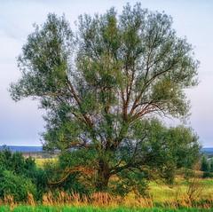 (Alexx053) Tags: tree sky outdoor grass