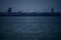Dublin Bay (Mark Waldron) Tags: dublin ireland bay evening seagull mto500 500mm mirrortele soviet vintagelens sony a7iii cranes construction