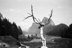taney 2019 (SimonSawSunlight) Tags: leica mda 35mm f25 trix kodak iso400 blackandwhite documentary photography analogue film taney lac sculpture wood mountains alps lake switzerland