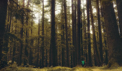 lllll .. (tchakladerphotography) Tags: nature naturallight autumn atmosphere mood foliage forest colorful manali india himalaya woods landscape travel trees