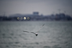 Dublin Bay (Mark Waldron) Tags: dublin ireland bay evening seagull mto500 500mm mirrortele soviet vintagelens sony a7iii donut bokeh mirror