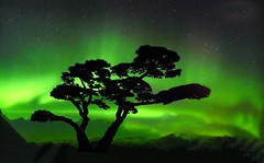 NORWAY - Aurora borealis (Jacques Rollet (Little Available)) Tags: auroraborealis night nuit norway norvège tree arbre ciel sky groupenuagesetciel