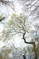 Up Above (esallen52) Tags: tree trees forest woods woodland spring foliage branches outdoors leaves