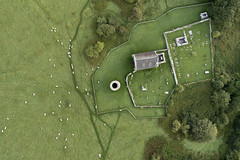 Tending the flock. Lough Derg (Sean Hartwell Photography) Tags: loughderg iniscealtra holyisland countyclare clare church graveyard sheep ireland drone aerial dji phantom4